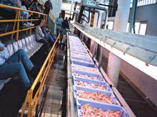 Instalación para la subasta de pescado